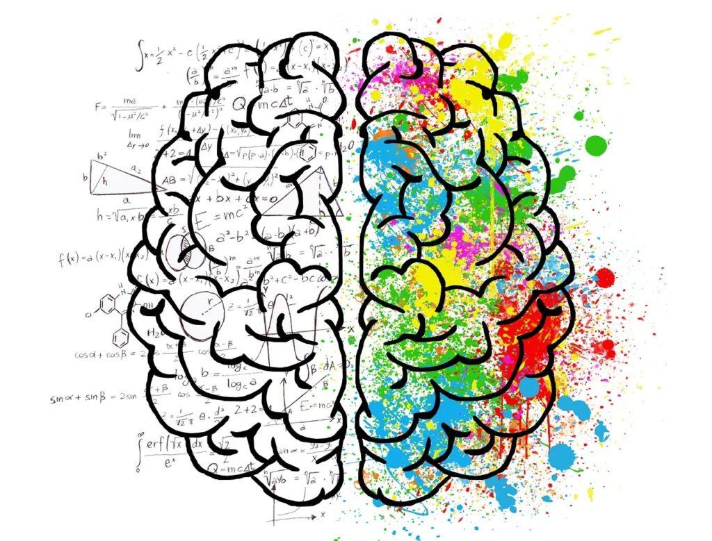 Dyscalculie, cerveau